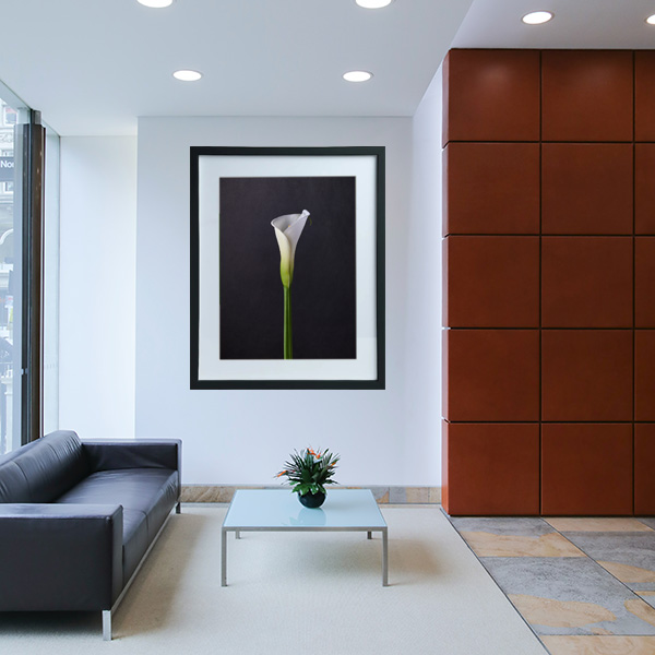 calla lilies 1 - jon kempner photography