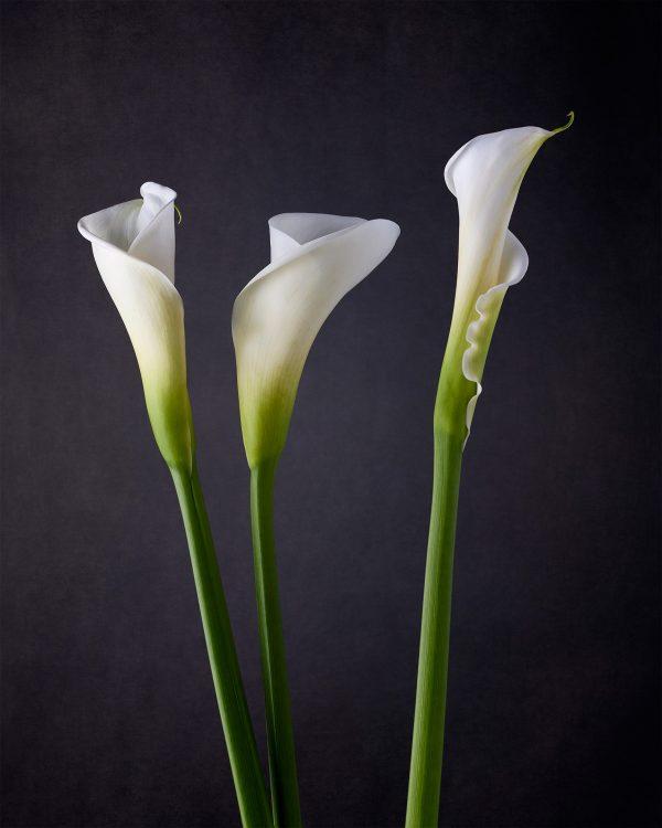 calla lilies III - jon kempner photography